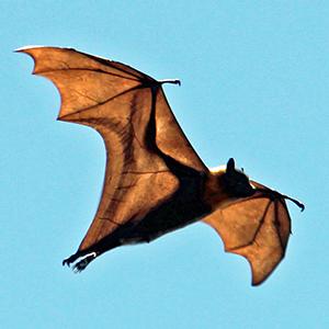 bat-300x300.jpg
